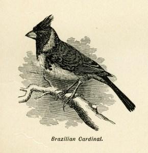 free vintage bird image