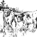 free vintage clip art calf cow in farm field