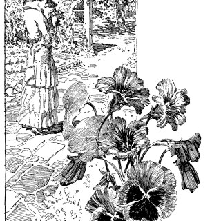 Ferry's seeds, vintage magazine ad, vintage garden clip art, black and white clipart, Victorian lady illustration