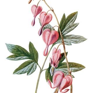 Free Vintage Printable Pink Flower