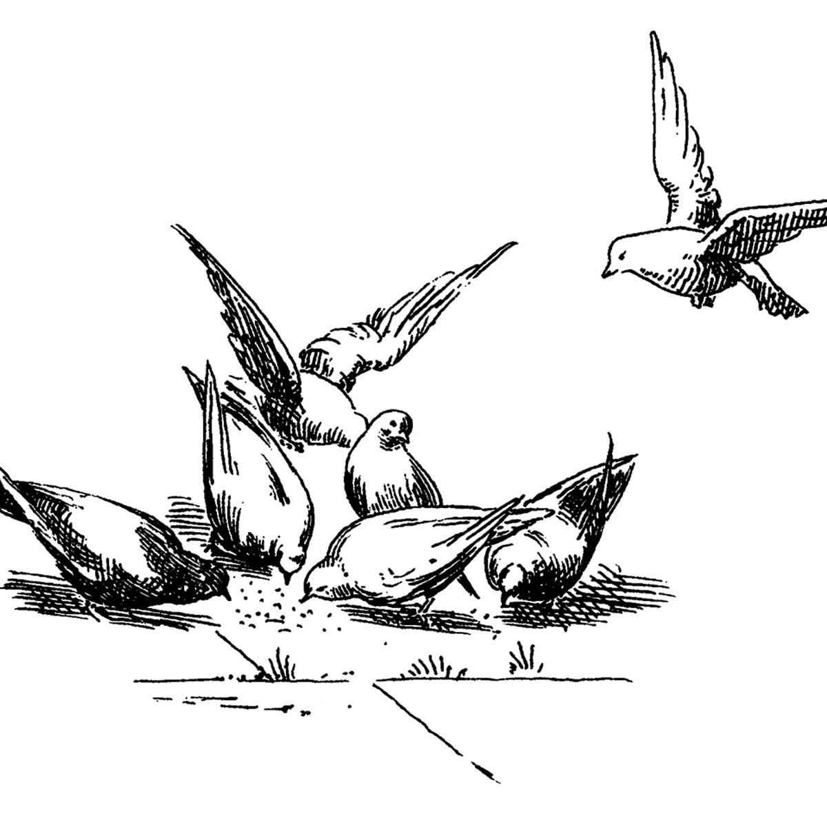 Free Vintage Clip Art Pigeons