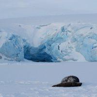 Antarctic Maternity Ward
