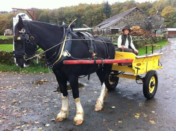 Horse and vintage yellow cart