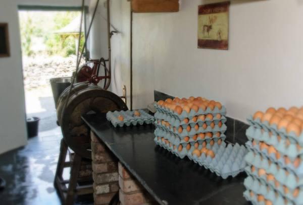 Farmhouse eggs