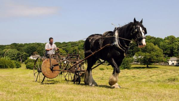 Experience a day with our shire horses