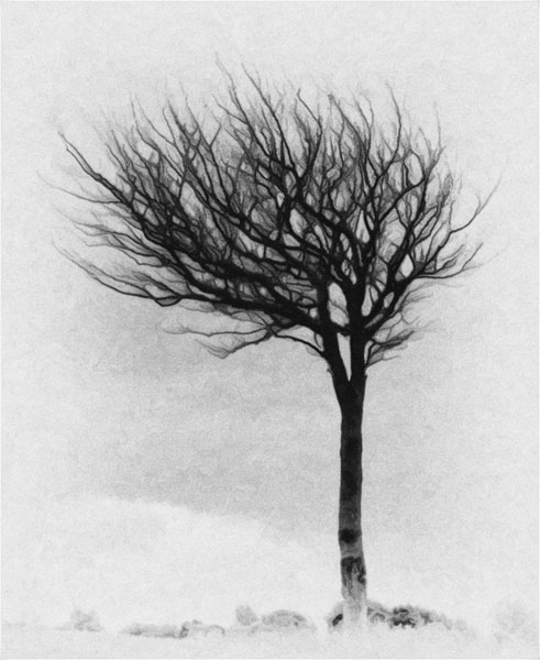 loney tree b-w