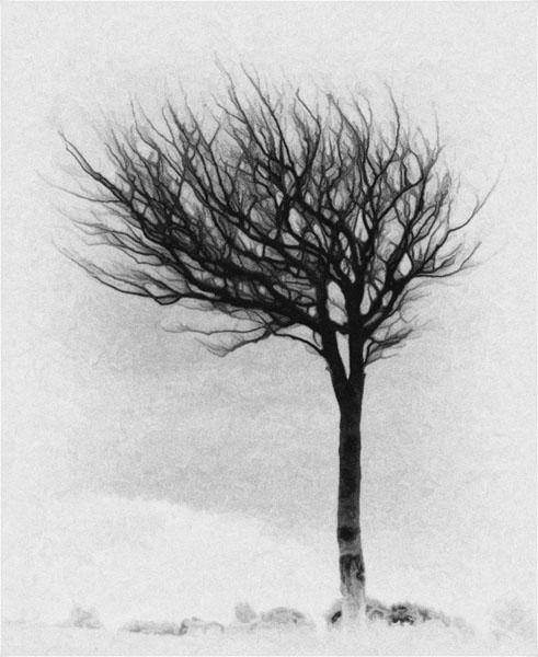 loney tree b-w