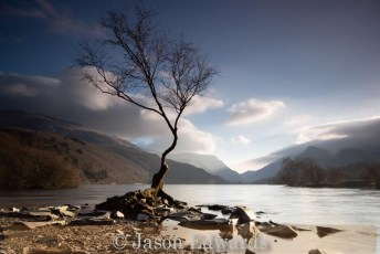 Commended_Jason Edwards_Another Lone Tree