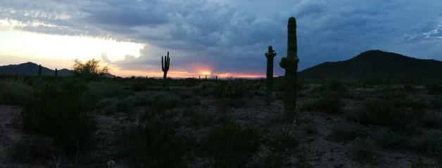 Desert Hiking Scene of Saguaro in Arizona