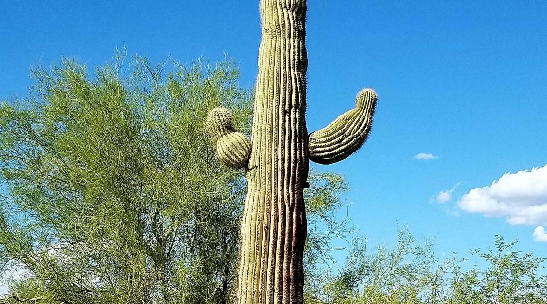 Arizona Saguaro Hiking Desert