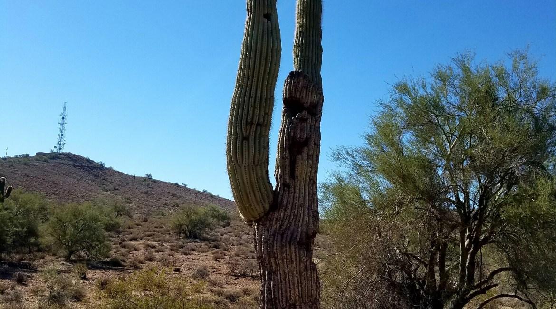 Arizona Desert Hiking Saguaro