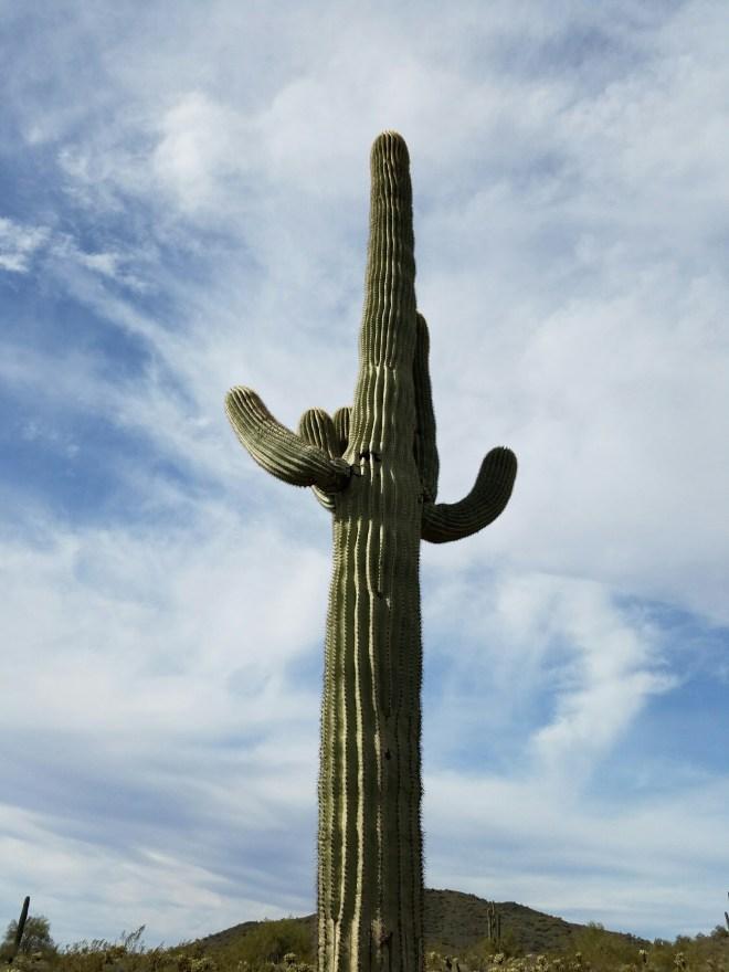 #hiking #arizona #desert #saguaro #cactus
