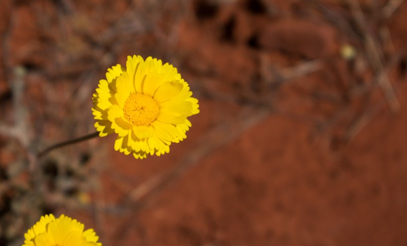 Sedona Courthouse Butte Trail-112