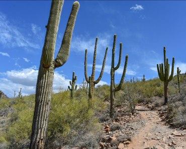 McDowell Sonoran Preserve Gateway