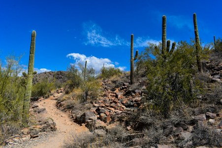McDowell Sonoran Preserve Gateway Trailhead Rusty Ward Hike Hiking