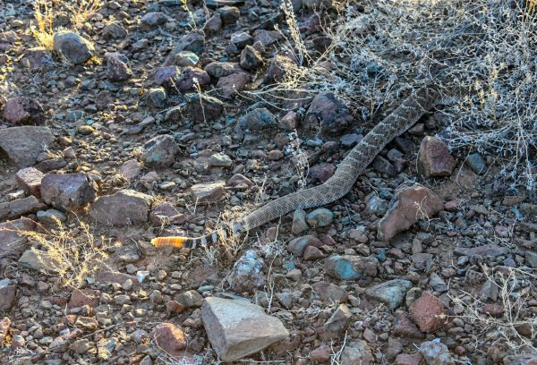 Hiking Arizona Rattlesnake Rusty Ward
