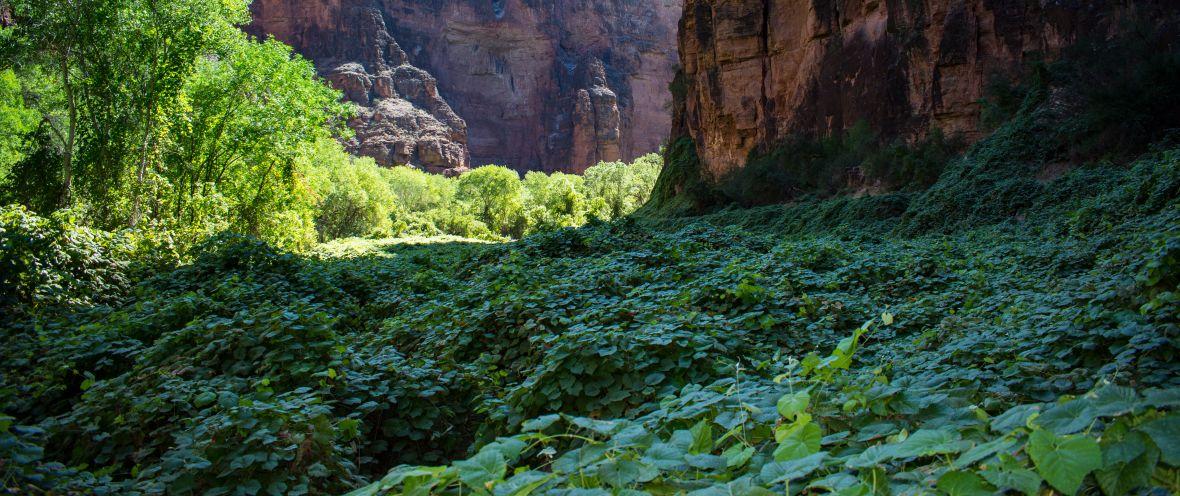 Hike to Beaver Falls Havasupai Arizona