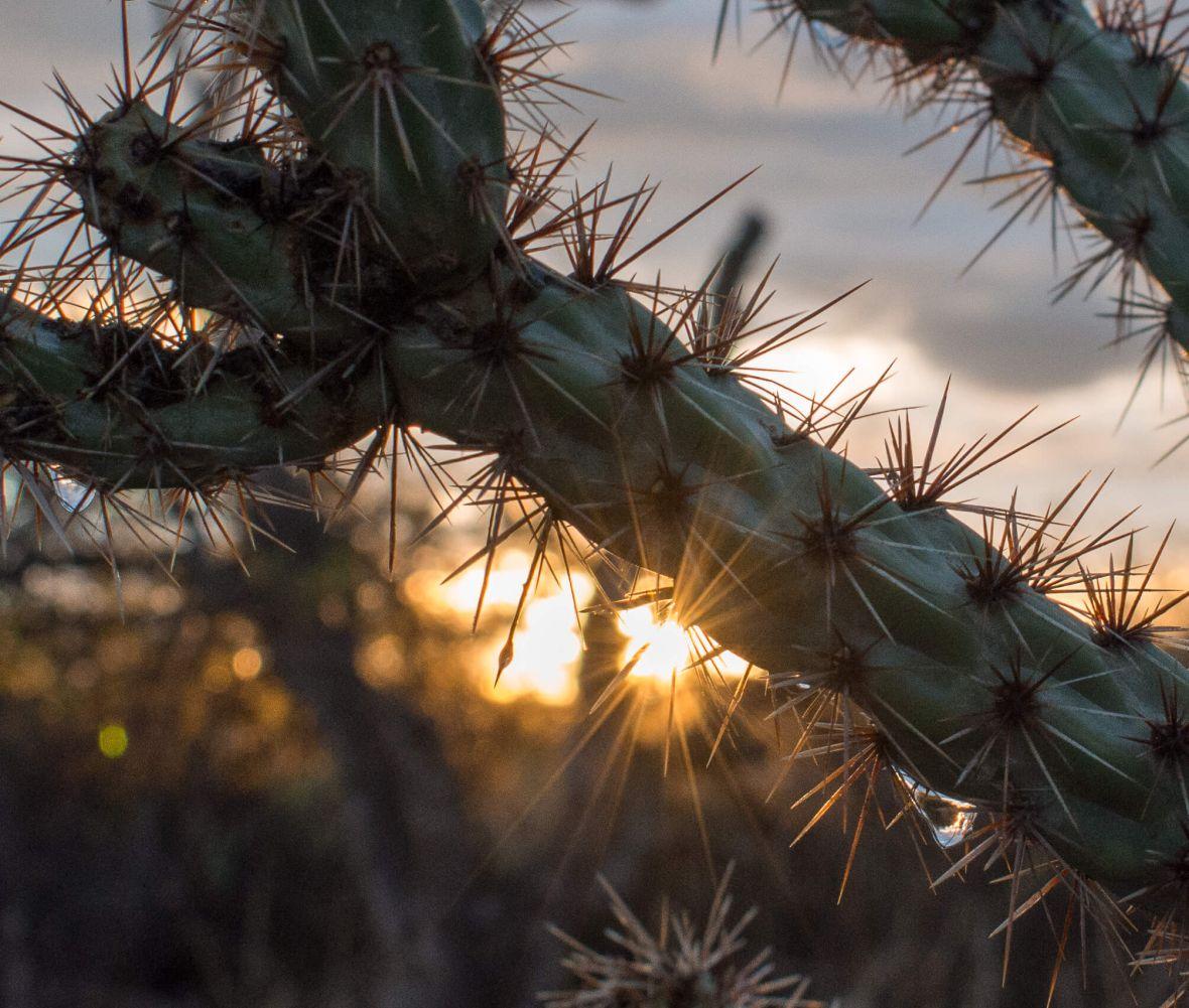 Hiking Wet Desert ArizonaHiking Wet Desert Arizona