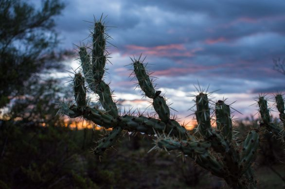 Hiking Wet Desert Arizona