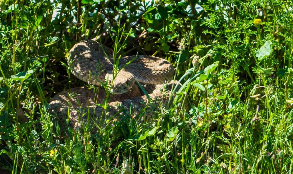 Rattlesnake hiking arizona