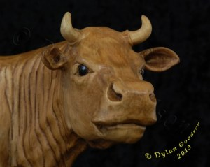 close up of the cow's face