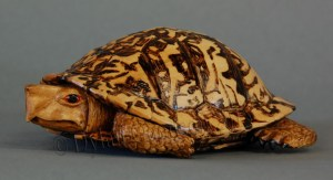 Eastern Box turtle carved from basswood by dylan goodson