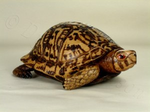 Wooden box turtle hand carved by Dylan Goodson