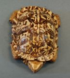 Eastern Box turtle carved from basswood by dylan goodson top view