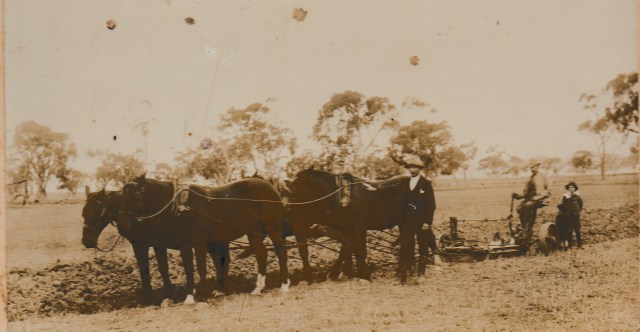 Owen McPhillips on plow. John Francis Laffan standing at horse. Bernard (barely visible) is standing to the left of James (Leo)