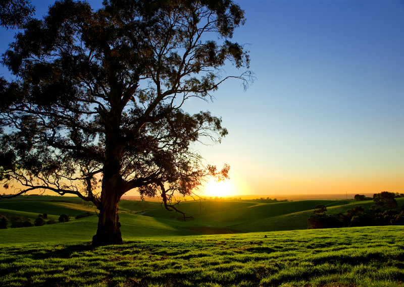 lucid dream beautiful sunset over rural meadow landscape