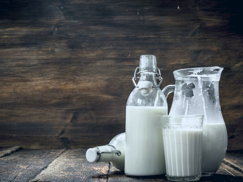 Is Cow's Milk Harmful to Humans?