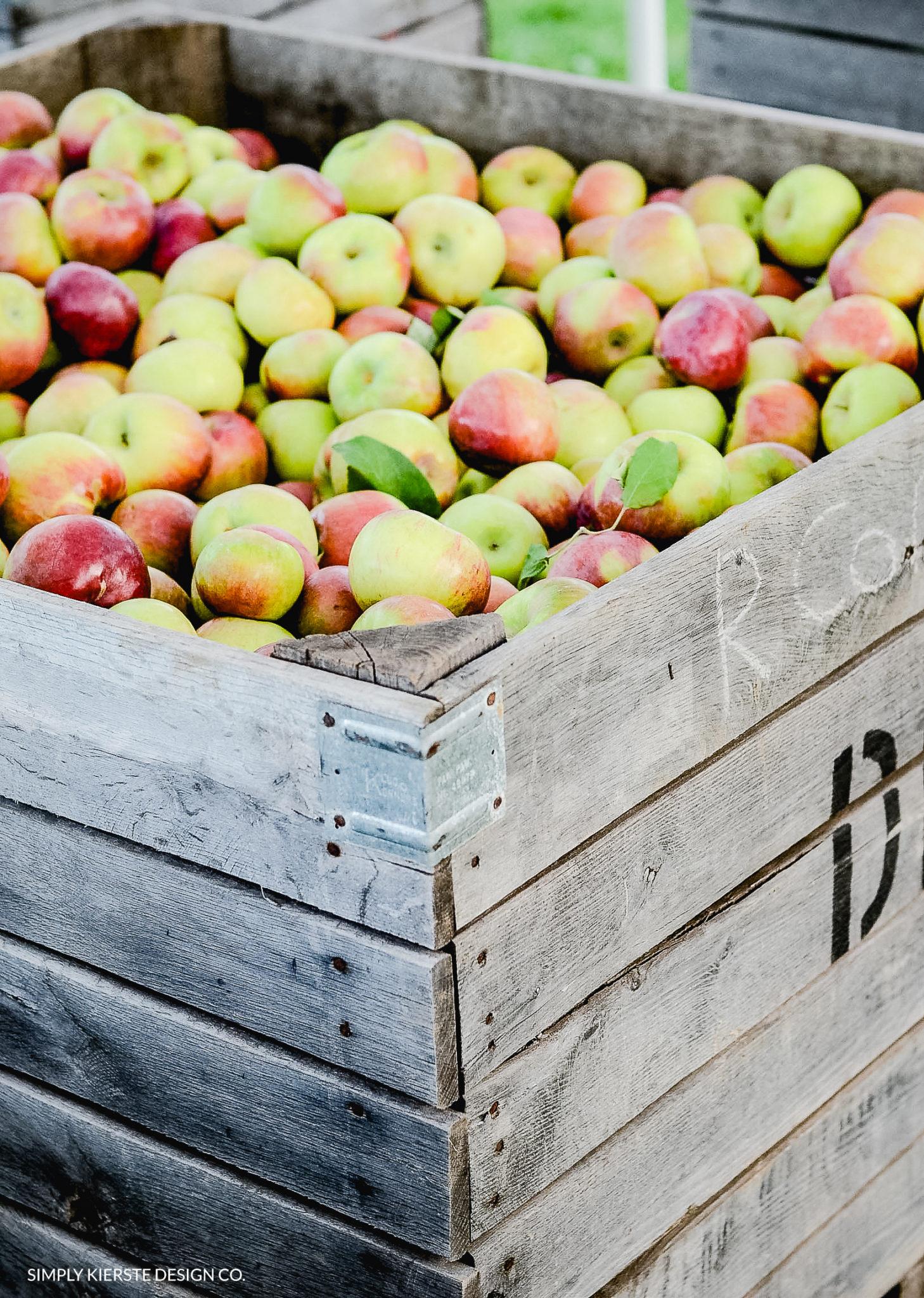 How to Make the Perfect Caramel Apples   Tips & Tricks   oldsaltfarm.com