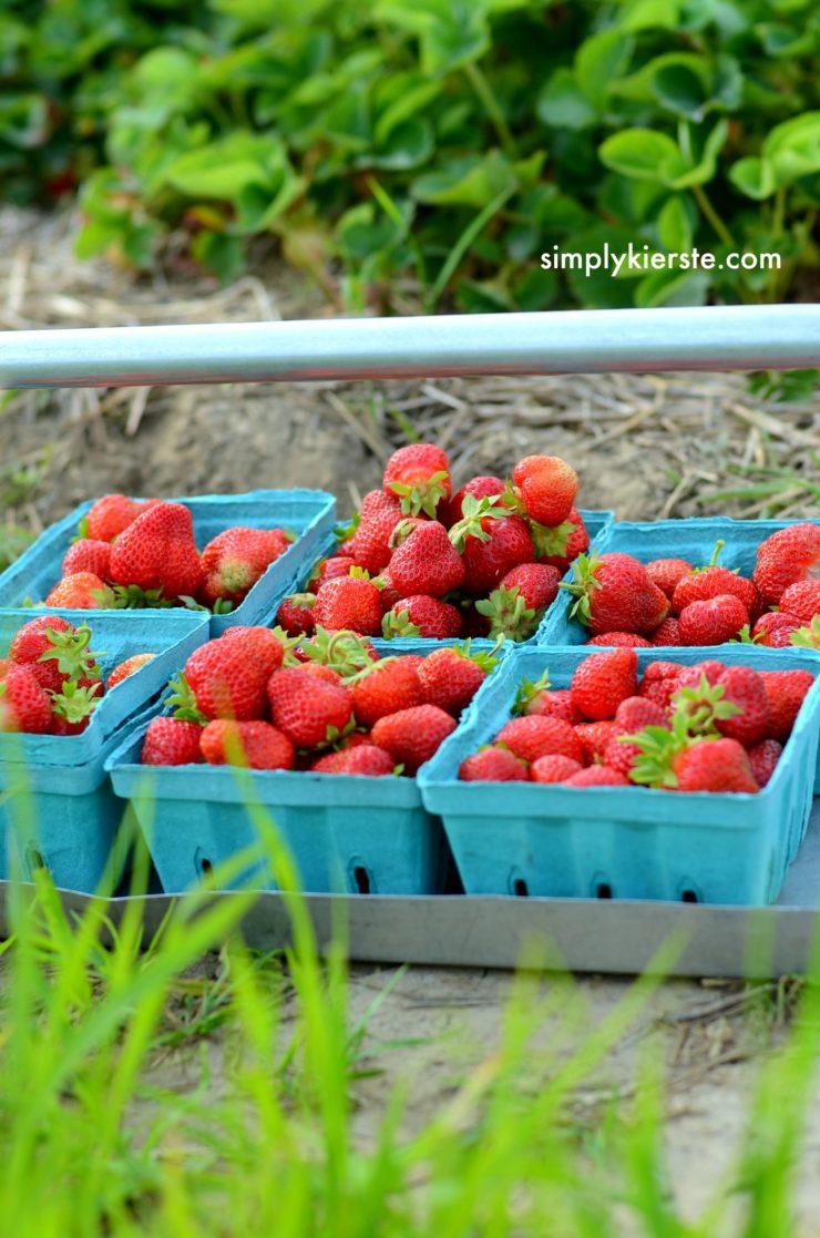 Strawberry Picking | How to do Summer on a Budget | oldsaltfarm.com