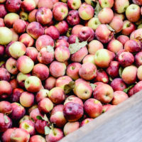 Apple Picking | Apple Farm | Fall Family Tradition | oldsaltfarm.com