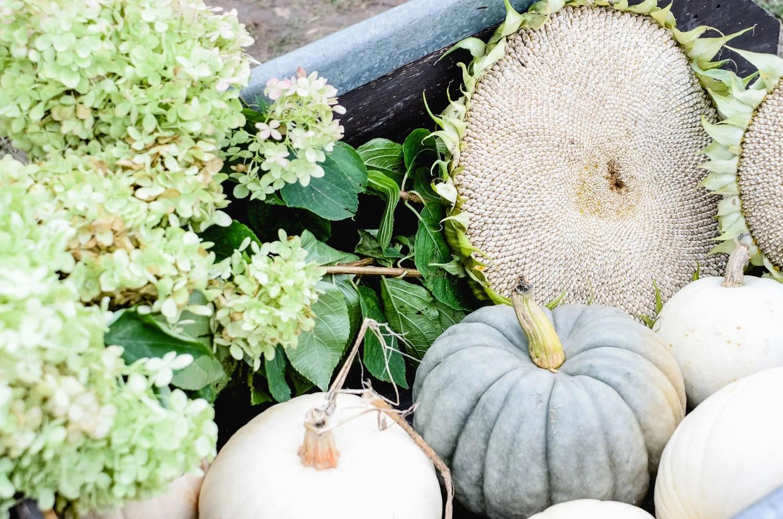 Apple Picking | Apple Farm | Fall Family Tradition | oldsaltfarm.com