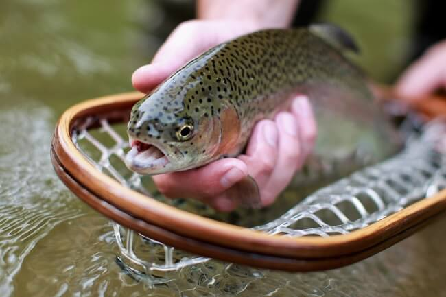 The Secret Guide To Trout Fishing
