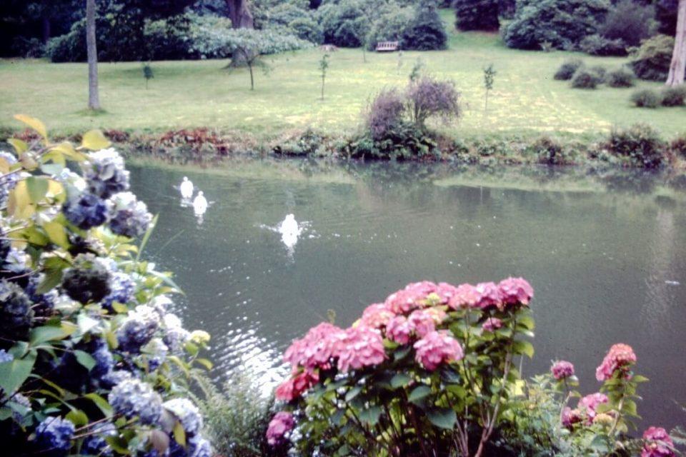 Wiltshire - Wiltshire-09-Oct-1979-Stourhead-Swans.jpg