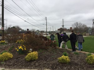 old southside 2017 great indy cleanup rosebushes at welcome garden