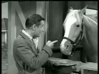 Mister Ed – Ed the Beneficiary 3