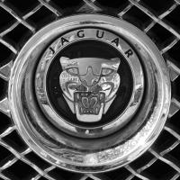 Logo Jaguar X250 (2008-2015)