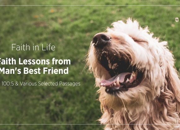Faith Lessons from Man's Best Friend
