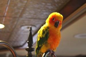 Emro the Parrot