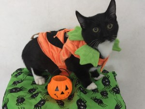 Pet of Month-Andi Rooney