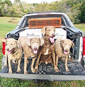 Blue Ridge dogs