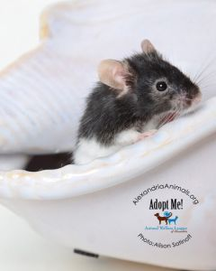 pets of month-Popcorn