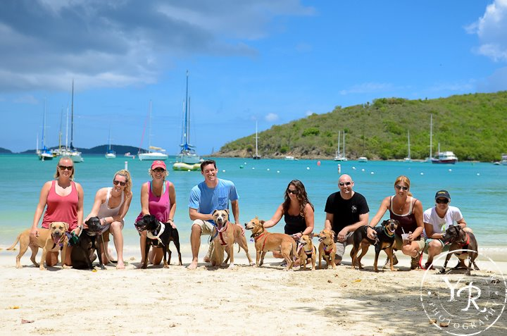 Dog (and Cat) Days in the Virgin Islands