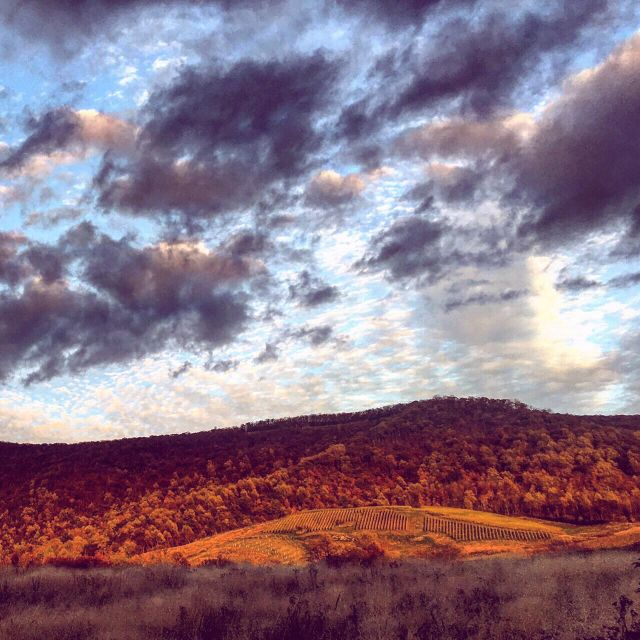 Blue Ridge- Glen Manor Vineyards view in the park. Photo by Shannon Koprivich