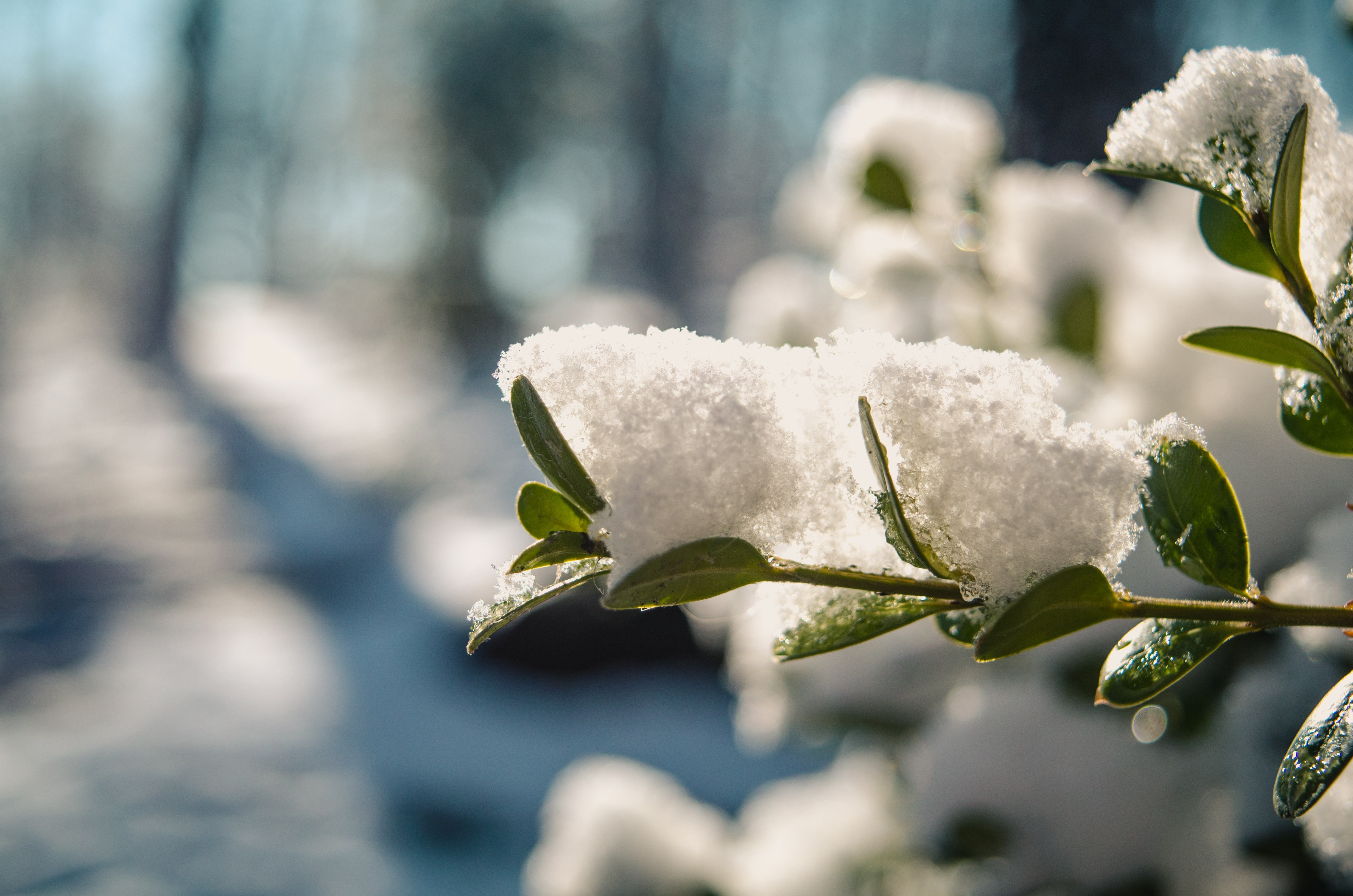 Winter Garden Tips – Don't Be Caught Off Guard!