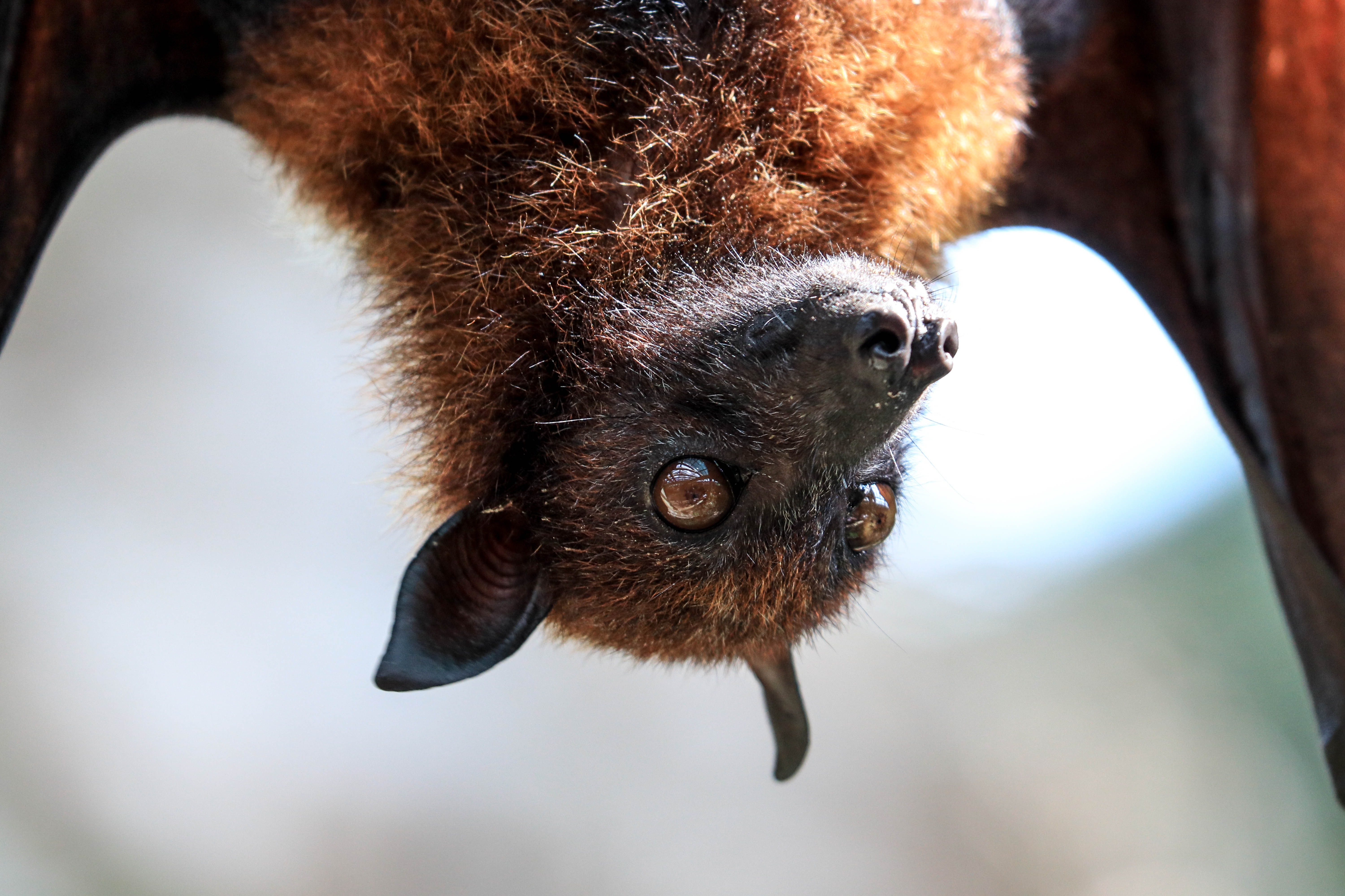 Just Batty For Gardens