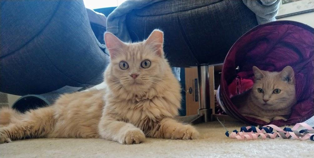 """The Joys of Adopting a """"Hard to Adopt"""" Pet"""